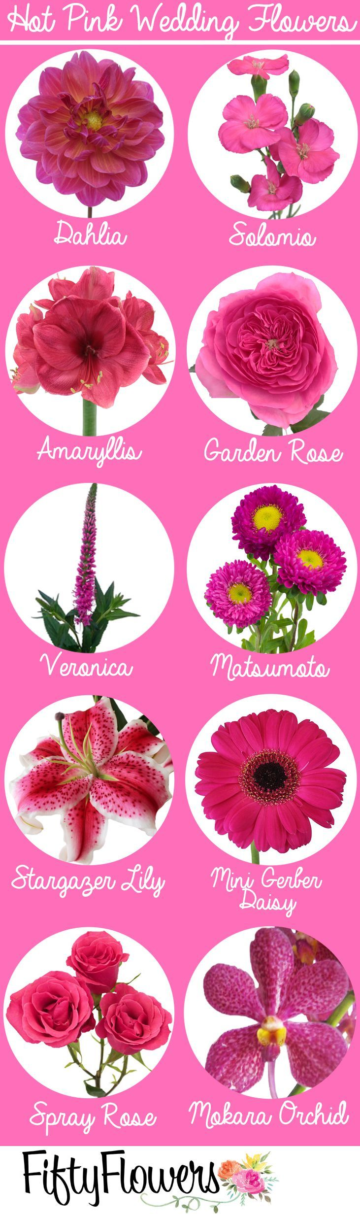 Pink Flowers Bring Pops Of Cheer To Any Space Learn About Types Of