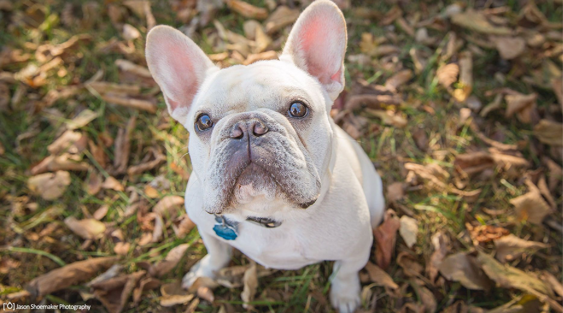Busy Paws Llc Offers Pet Sitting And Taxiing And Dog Walking To Families In Kansas City Dog Walking Pets Dogs