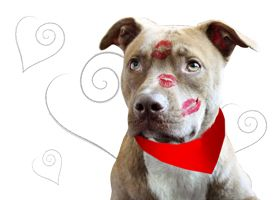For pit bull lovers (or any dog lover in general) check out ...