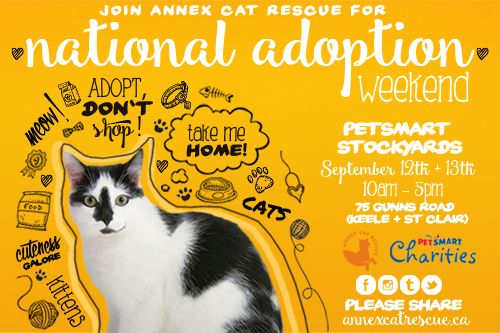ACR at the 2015 PetSmart National Adoption Weekend