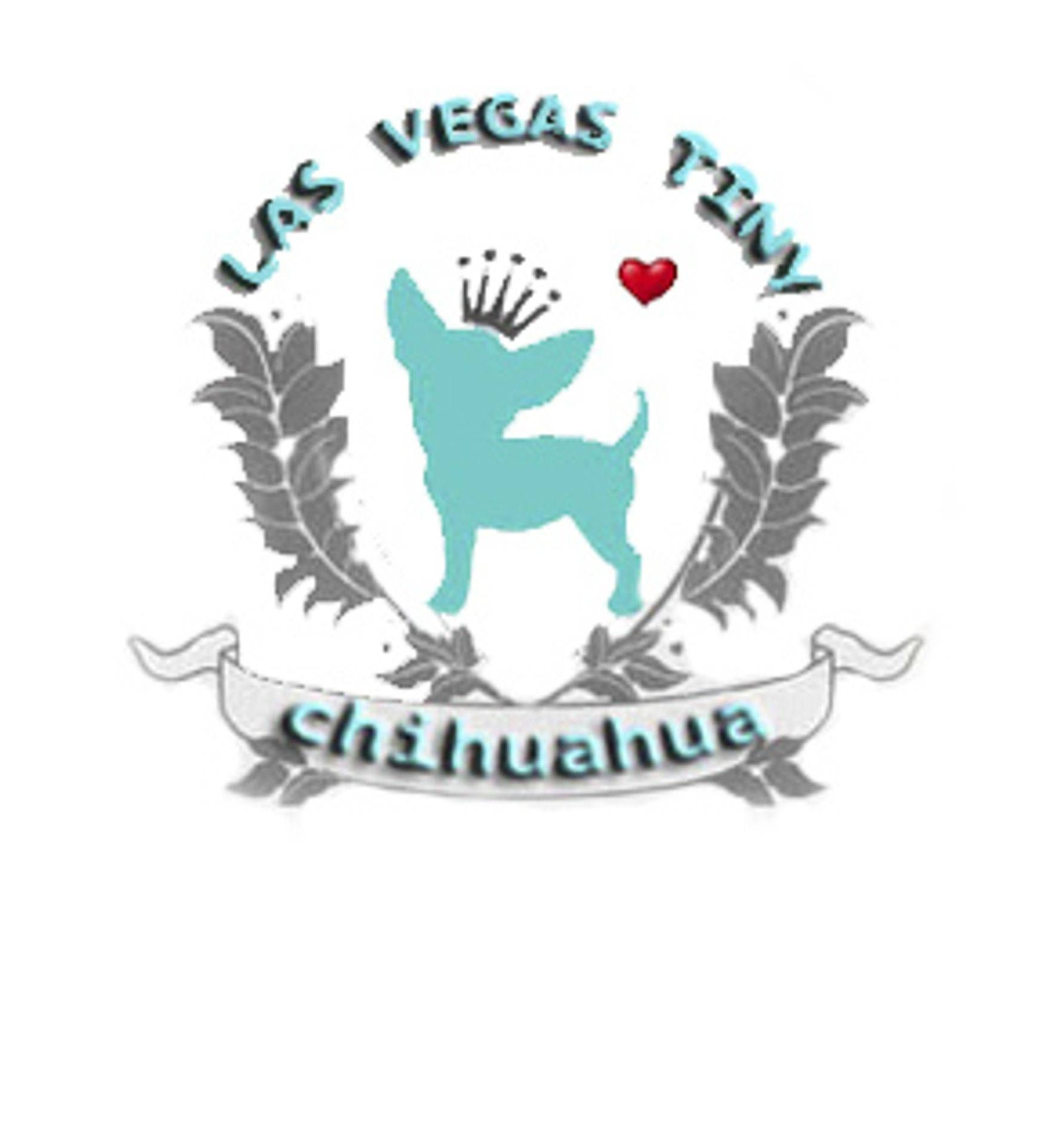 Chihuahua Puppies For Sale Las Vegas Home Breeder Chihuahua