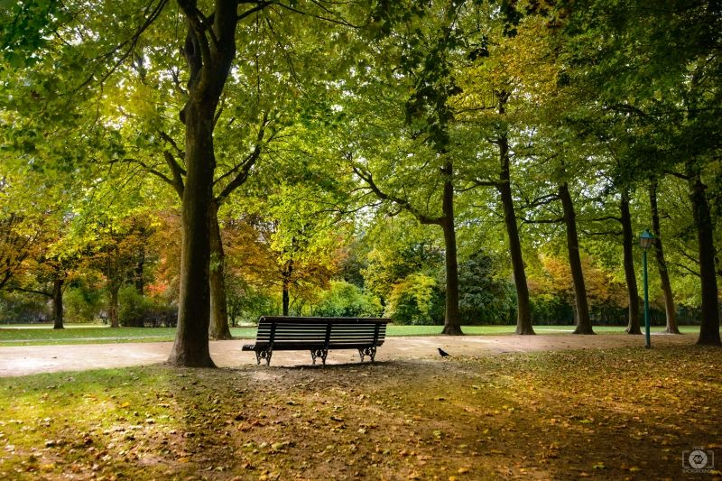 Fall In The Park Background Background For Photography Background Park Photography