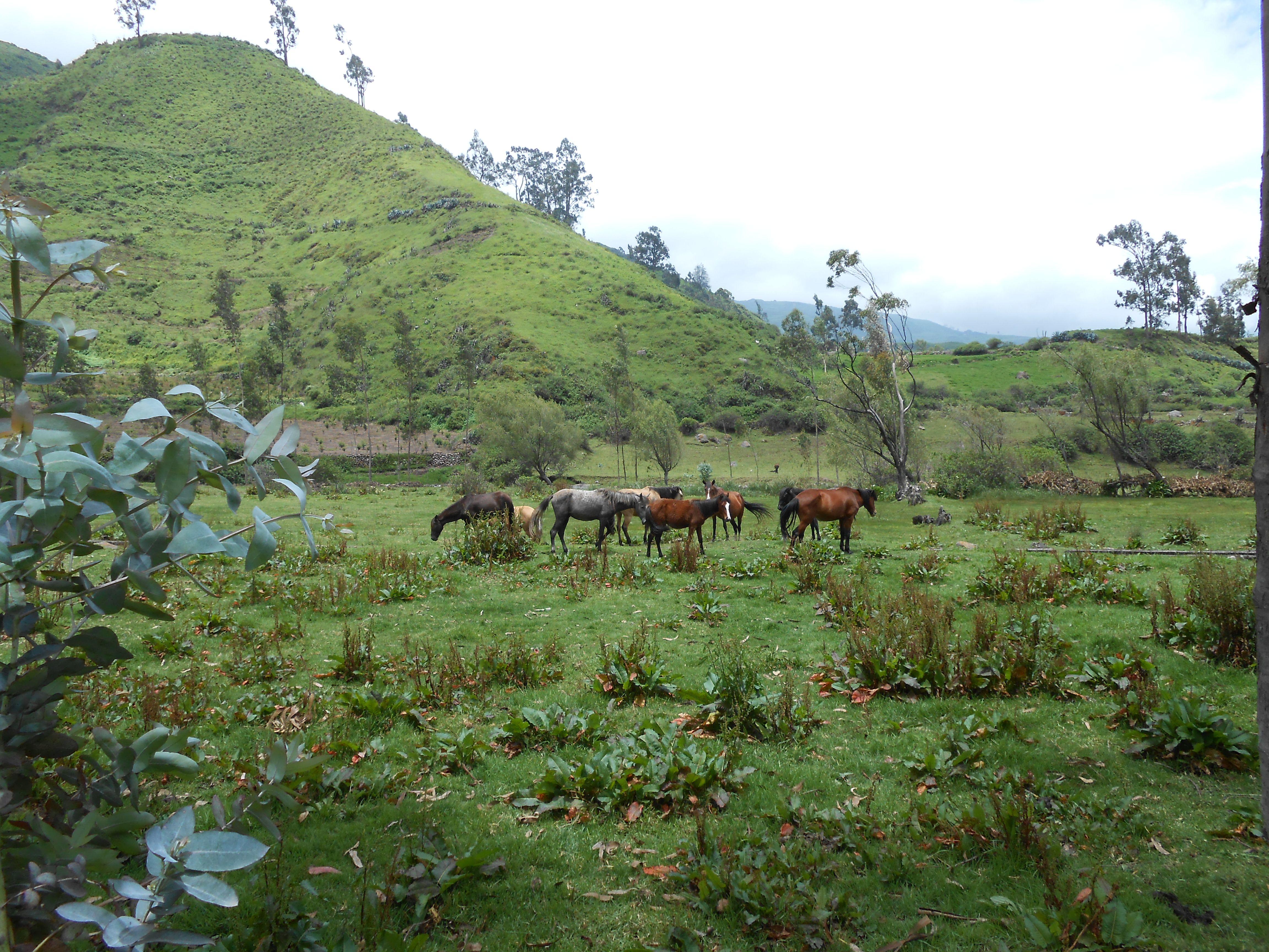 Caballos en Obrajillo