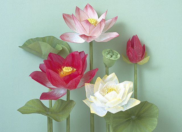 About toys essay lotus flower