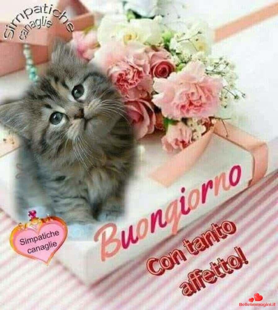 Foto Belle Buongiorno 104 Immagini Divertenti Buongiorno