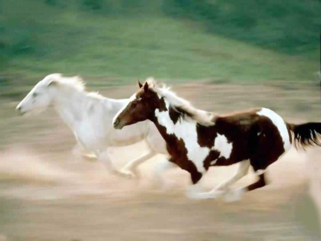 Great Wallpaper Horse Beauty - b257166bcf0b94099187cca723f17102  Collection_904640.jpg