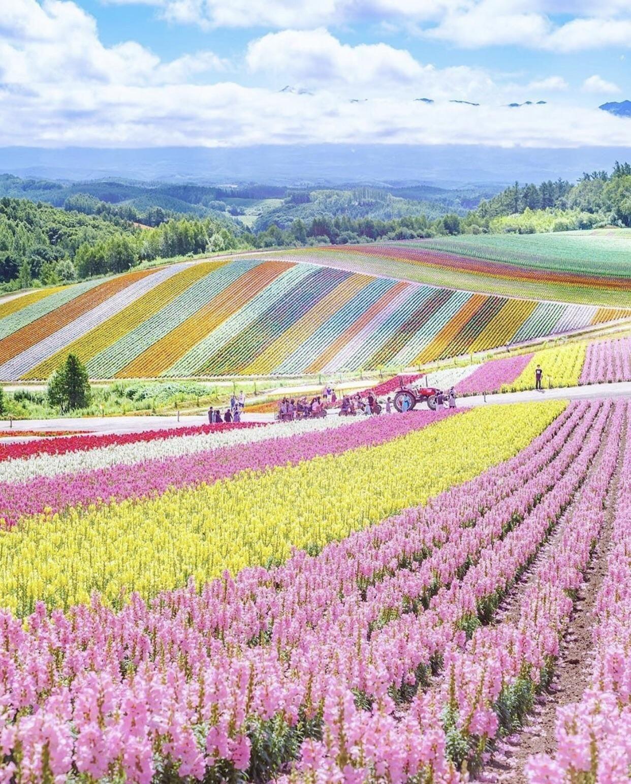 Flower Farms In Hokkaido Japan Pics Japan Photo Japan Picture Nature