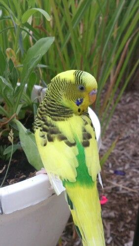 Pretty Turbo again | Mother Nature kicks arse | Parakeet