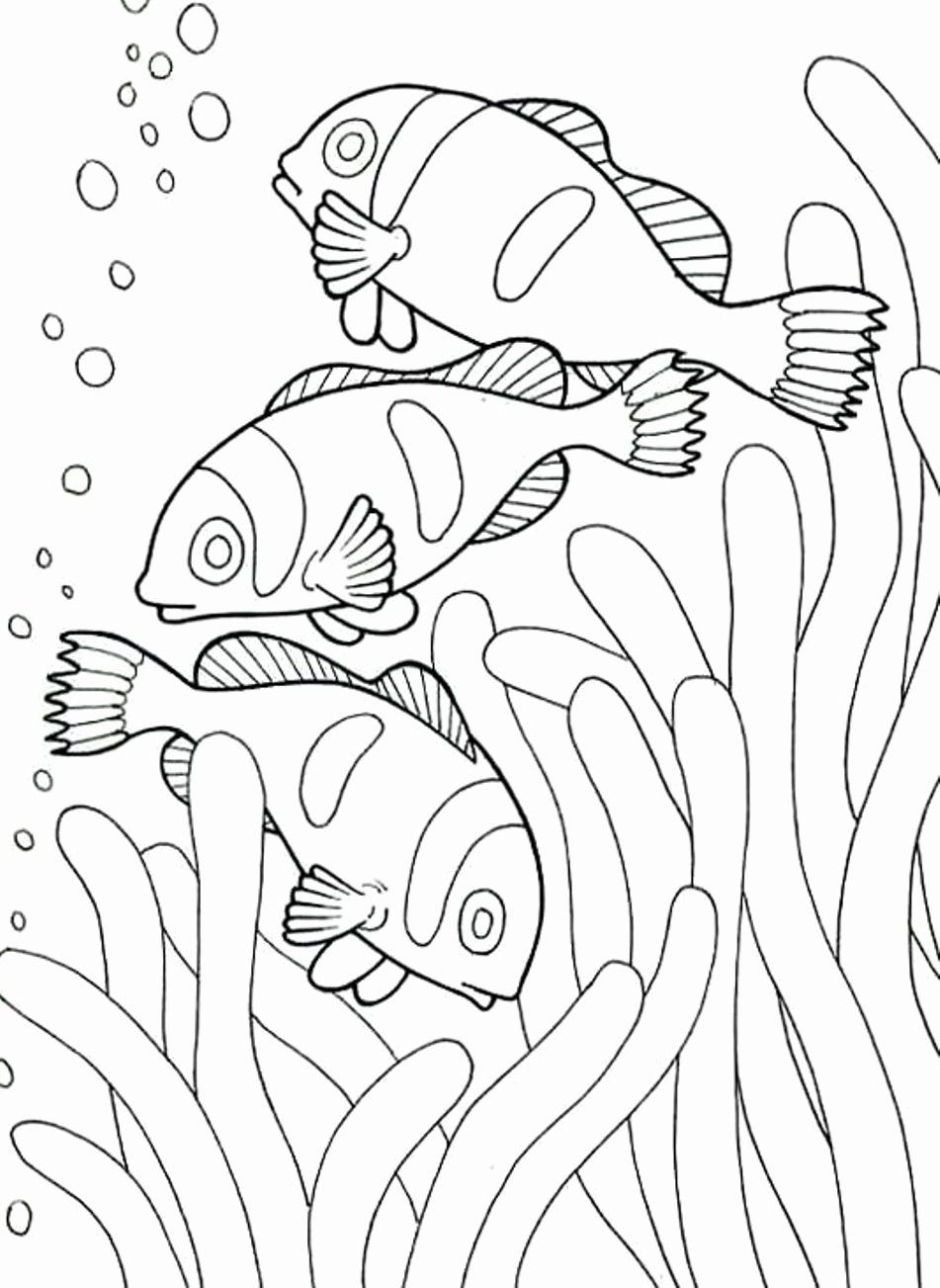 Free Printable Fish Coloring Pages For Kids Fish