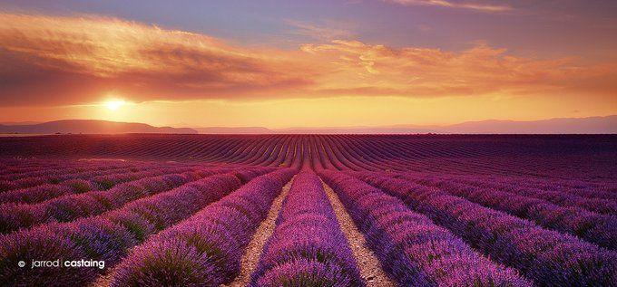Sunset over lavender fields, Provence, France   Photography by ©Jarrod Castaing