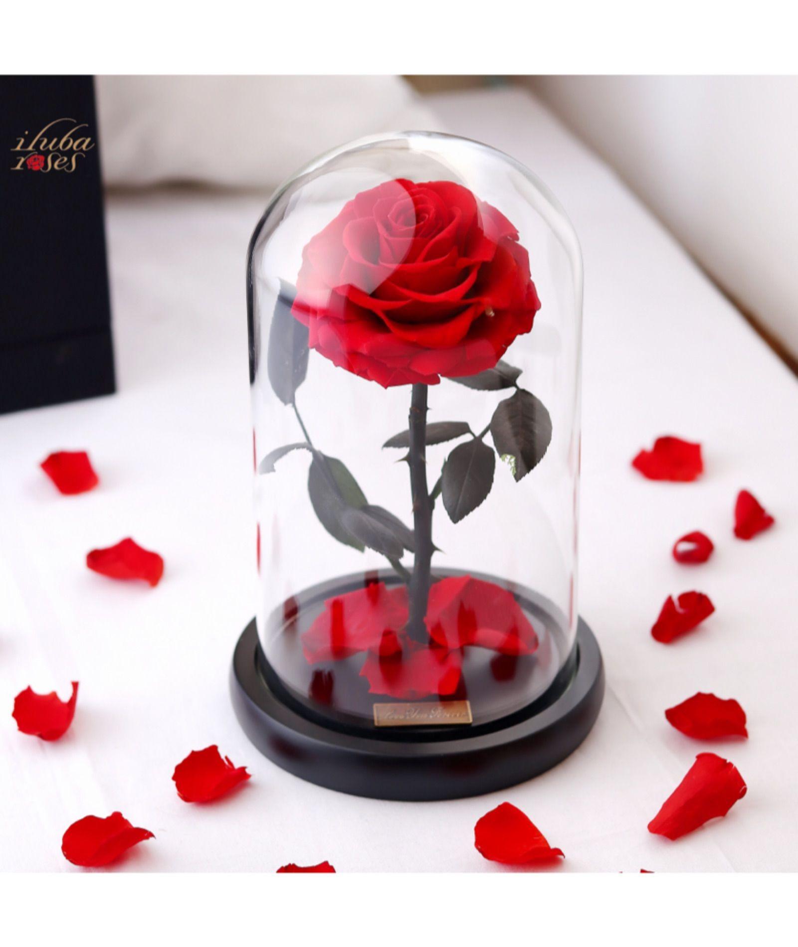 وردة ايلوبا روز احمر داخل فازة زجاجية Beauty And Beast Wedding Beauty And The Beast Rose