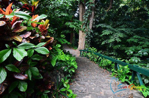 Visit Jardin Botanico de Puerto Rico (San Juan Botanical Garden ...