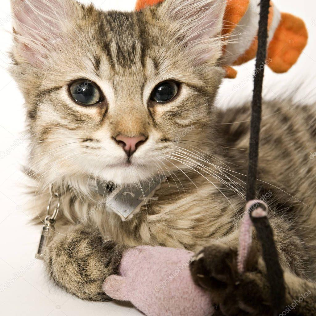 Portrait Cute Kitten Stock Photo Aff Cute Portrait