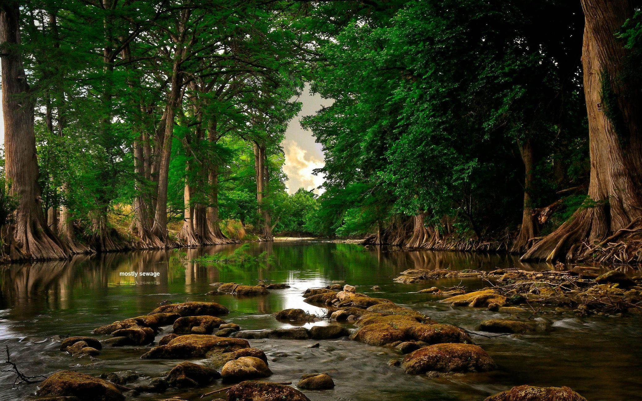 A Peaceful Forest Creek 2560x1600 Beautiful Nature Nature Photography Beautiful Landscapes