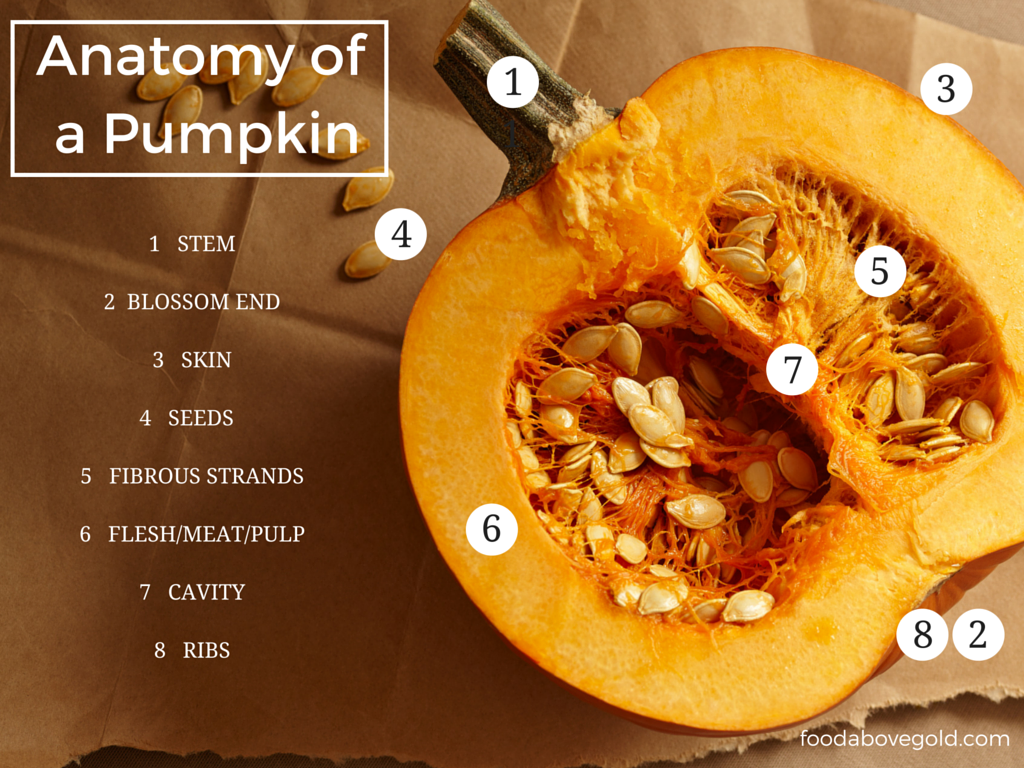 How to store pumpkins - Learn The Anatomy Of A Pumpkin And How To Buy Store Pumpkins For Eating And