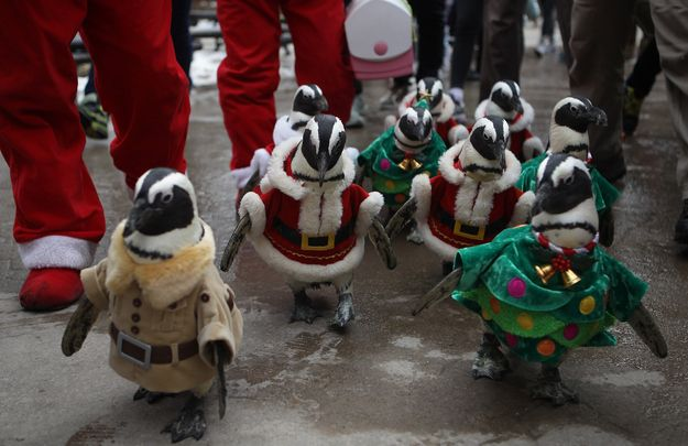 South Korean Theme Park Dress Up Penguins In Novelty Outfits For ...