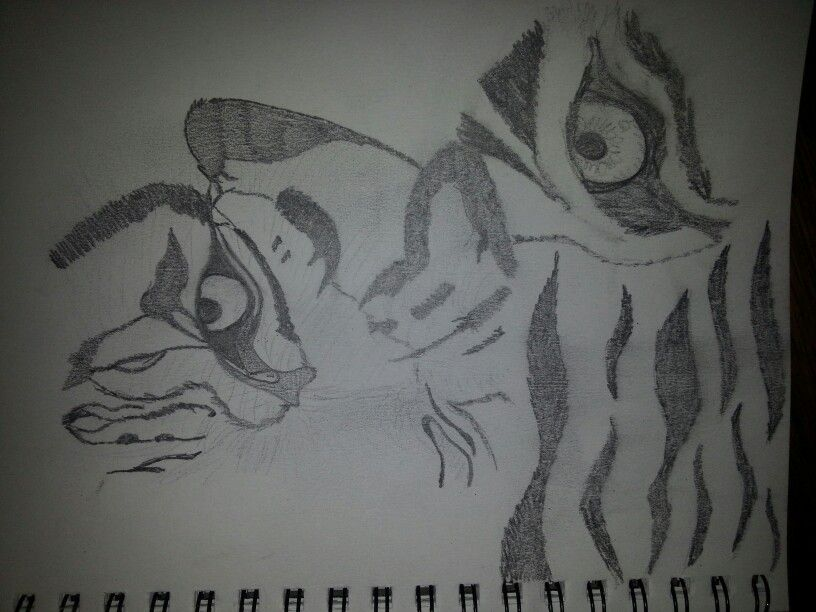 Line Drawing Of A Tiger S Face : Tiger picture close up of eye and half a face pattern