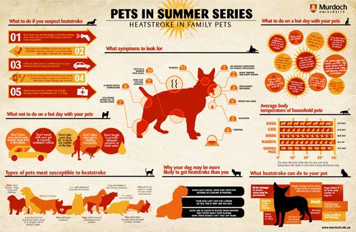 Murdoch University Warns Summer Fun Can Be Deadly For Pets Heat Stroke In Dogs Heat Stress Small Animal Hospital