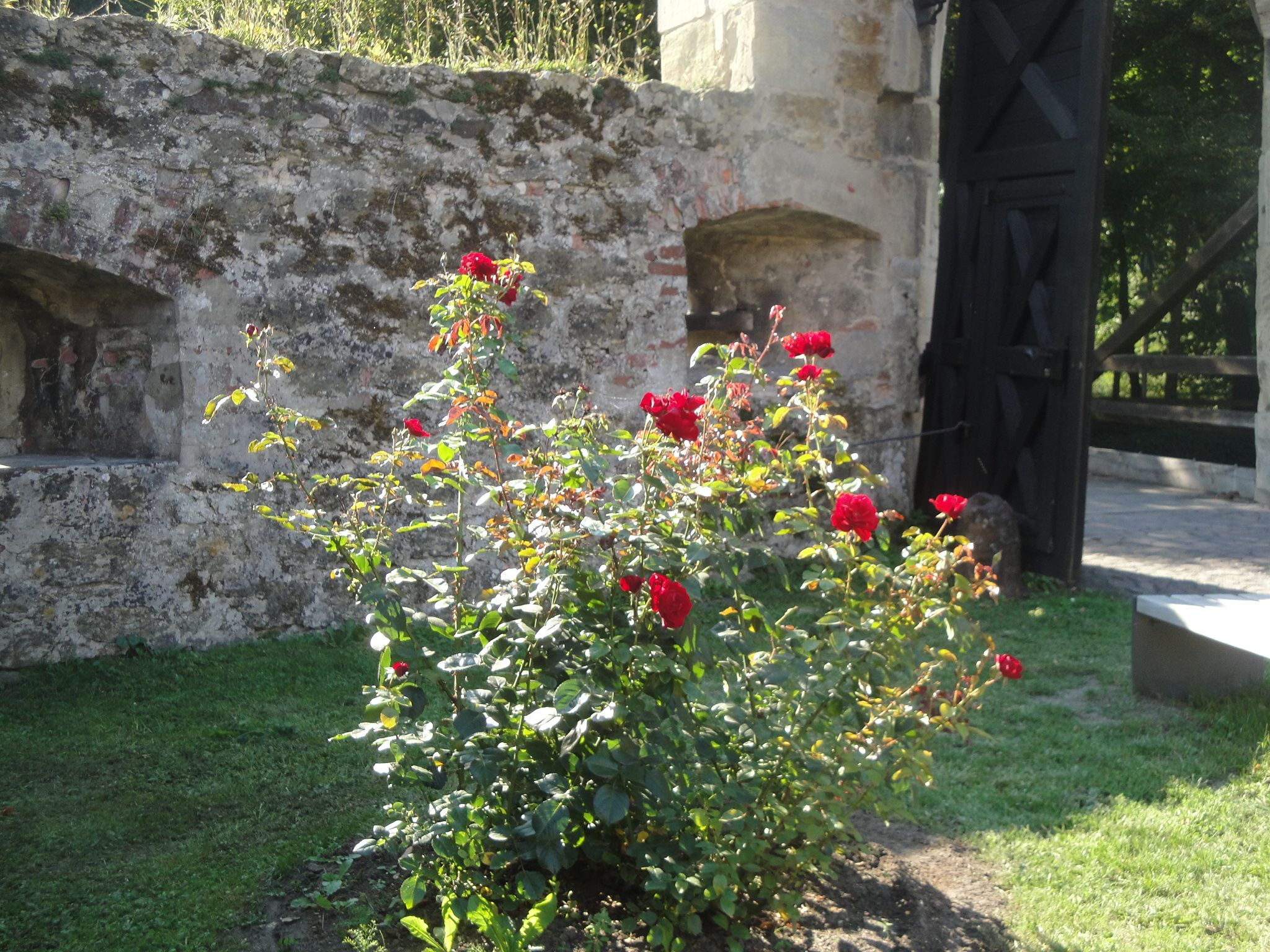Part of a medieval garden belonging to a castle along the Rhine River