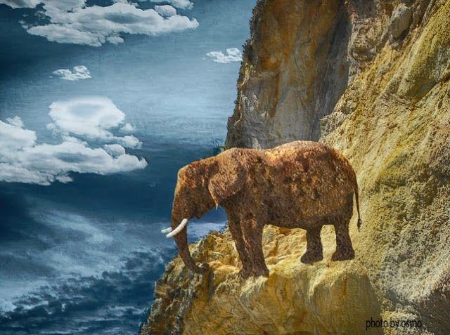 Atrapados por la imagen: elefante de piedra