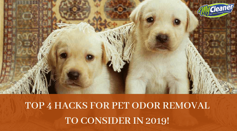 Dealing with the bad smell is the everyday task of pet owners. While pet odor removal is a challenging job but it can be possible when little bit of effort and strategies are implemented. Here you will get the top 4 hacks to help remove unpleasant pet odors in your home. Choose these hacks to get a satisfactory odor removal result.