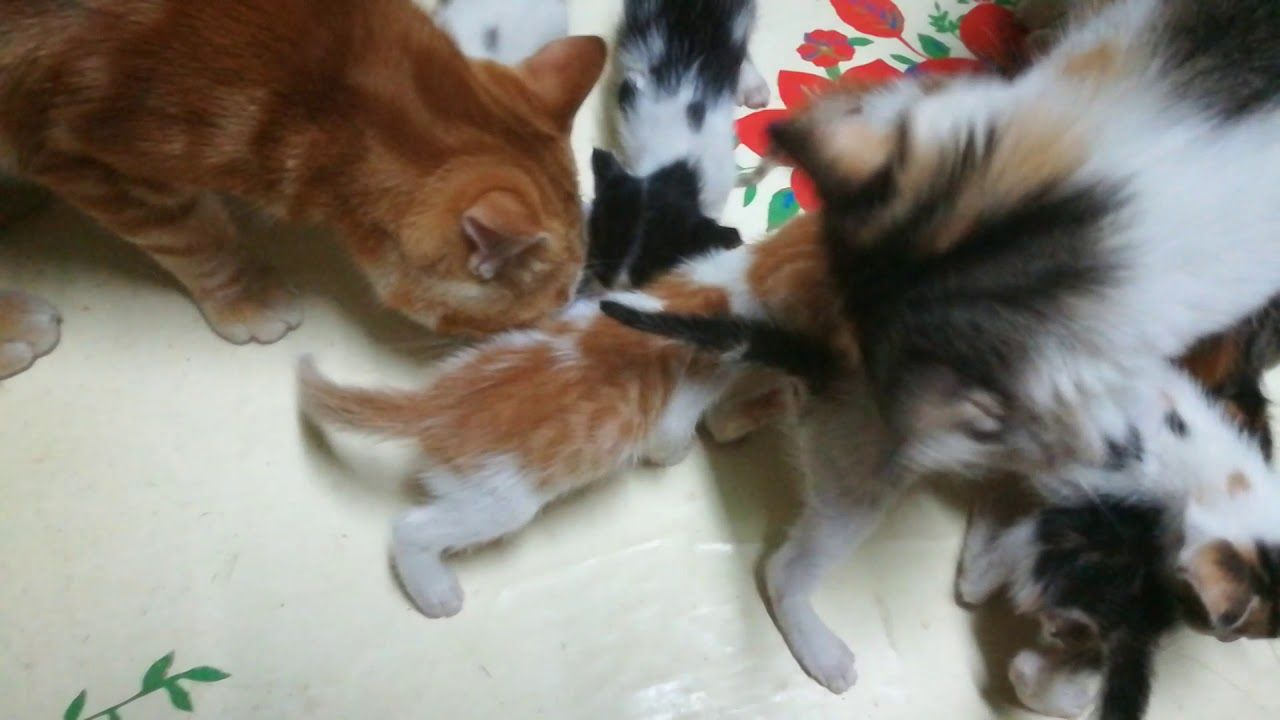 Dady Cat Drinks Milk Even He Is So Big Cat Drinking Drink Milk Cats