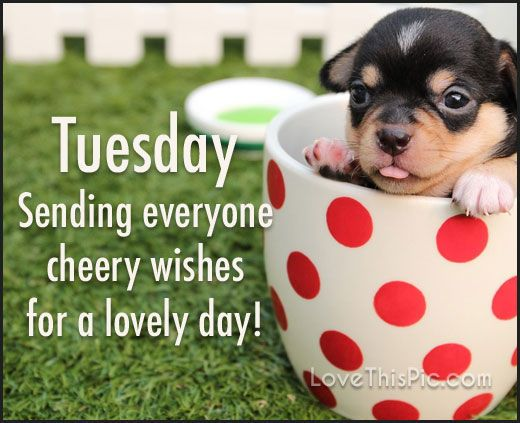 Sending Tuesday Cheer Good Morning Tuesday Tuesday Quotes Good