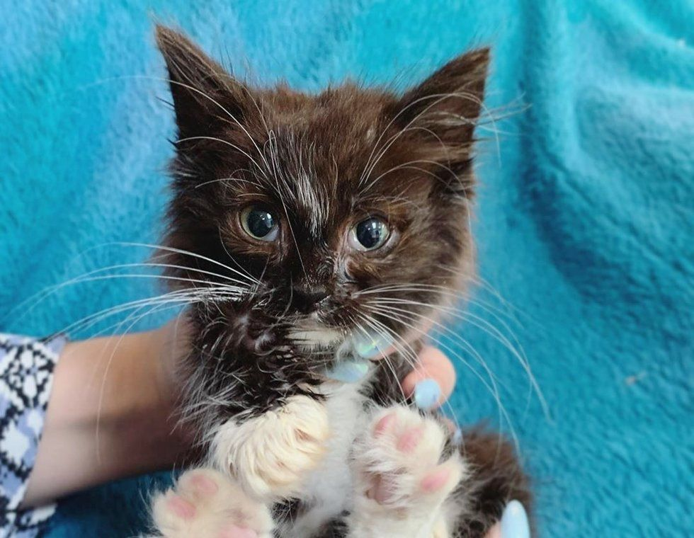 Kitten Rescued from Running into Street, Cuddles Everyone