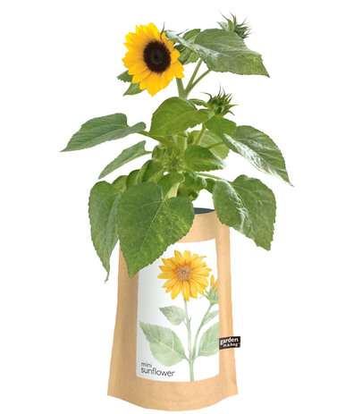 Garden In A Bag Sunflower In 2020 Sunflower Garden Grow Kit Mini Sunflowers