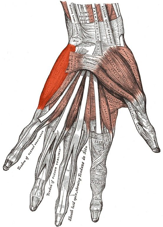 Pin By Leslie On Bodies In 2018 Pinterest Anatomy Hand Anatomy