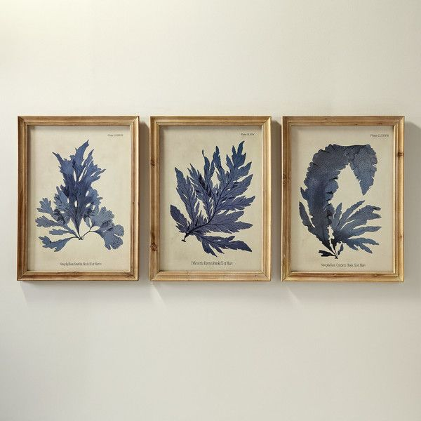Birch lane vintage fronds framed prints