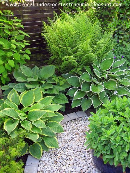 Abgesehen Von Buchs Und Rosen Habe Ich Vor Einigen Jahren Noch Meine Liebe Zu Hostas Entdeckt Und Versuche Uberall Welche Au Garten Garten Pflanzen Bepflanzung