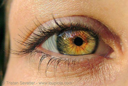 Liza S Eye Close Up Eye Color Hazel Iris Liz Macro People
