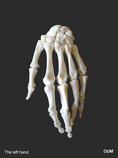 human bones hand the learning zone: the living animal ...