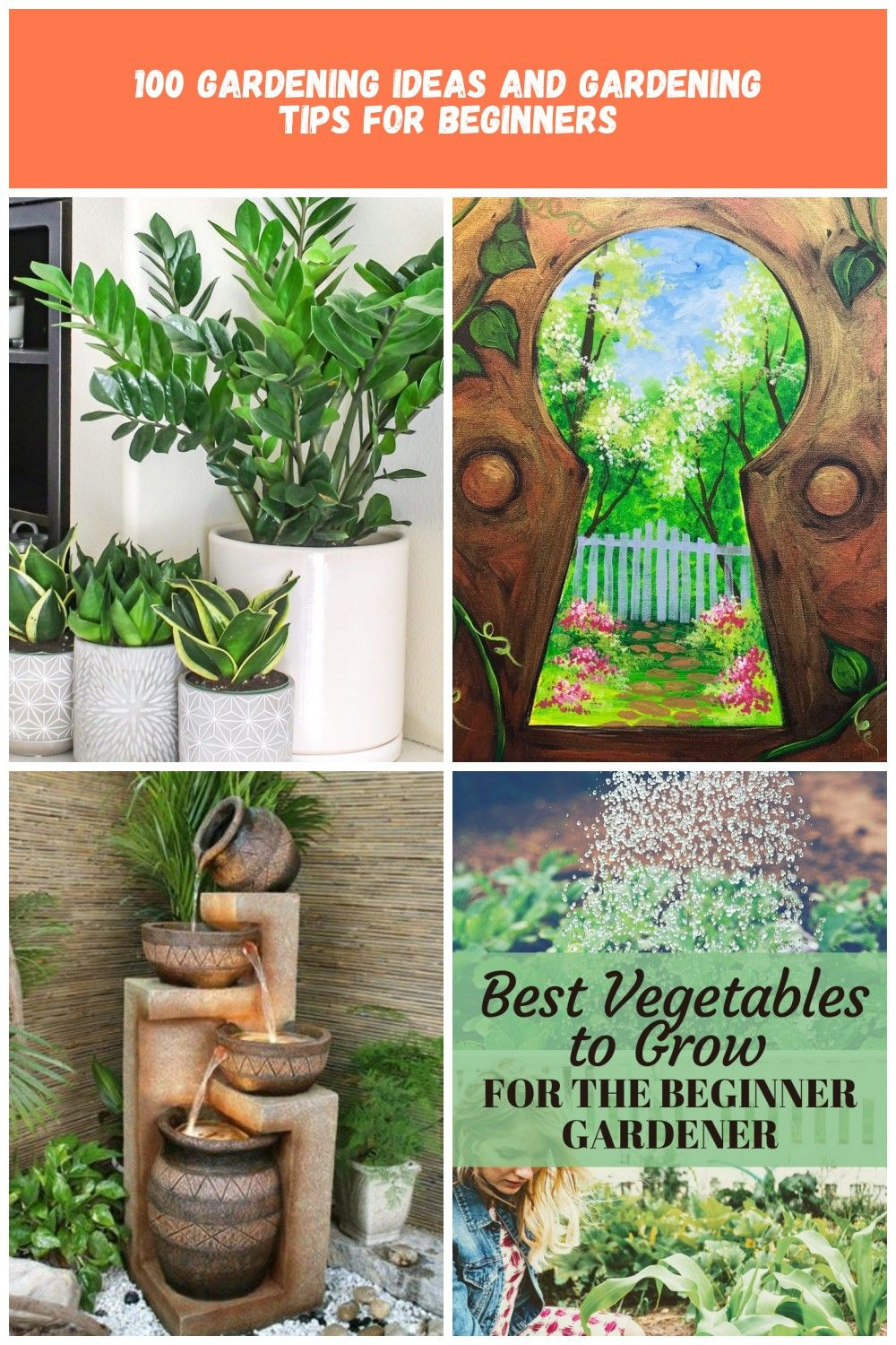 Top 8 low maintenance house plants for beginners  Garden For Beginners