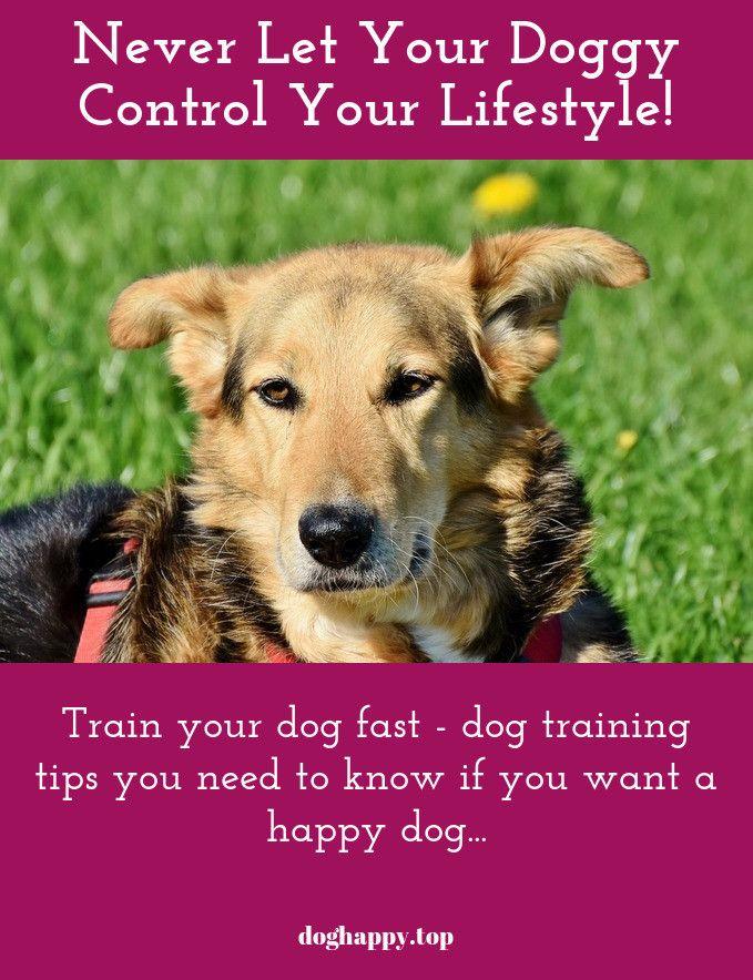 Good Dog Training Is The Key To Having A Happy Dog Dog Training