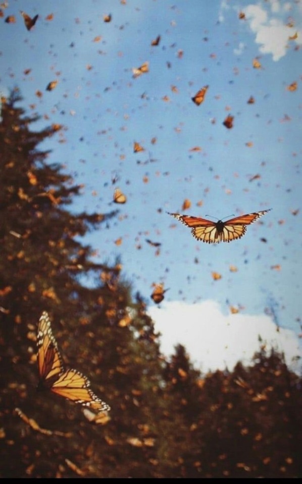 Butterfly Aesthetic On Tumblr In 2020 Aesthetic Wallpapers
