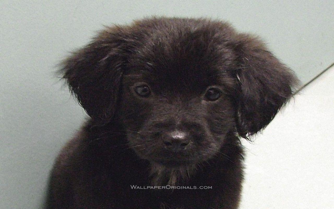 Puppies Wallpaper Black Lab Puppy Black Lab Puppies Black Labs Dogs Lab Puppies