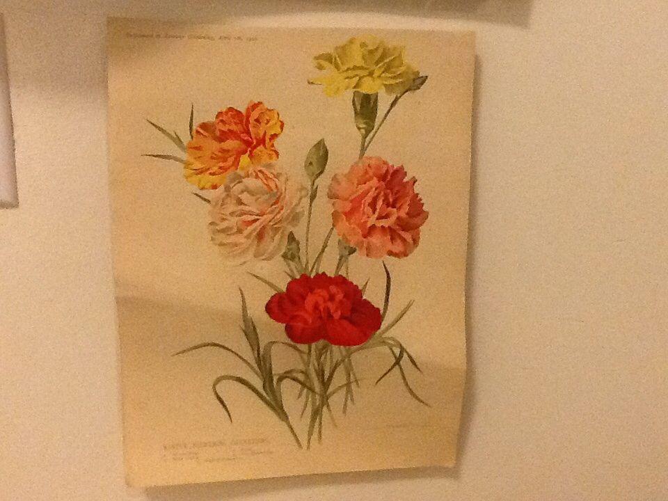 20's botanical print...Vintage shop find Cook Street Village