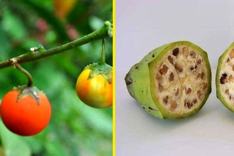 ОНЛАЙН ТЕСТ: Узнаете ли вы овощи и фрукты из прошлого? | Овощи