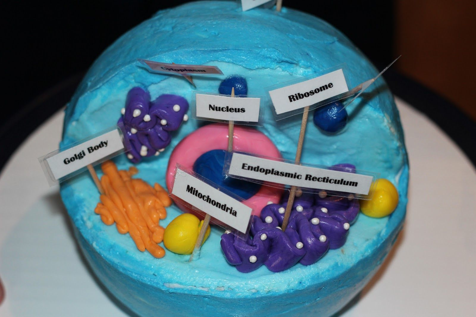 D plant cell cakes are a fun easy way to learn about plant cells d plant cell cakes are a fun easy way to learn about plant cells cell structure and organelles description from pinterest i searched for th pooptronica Images