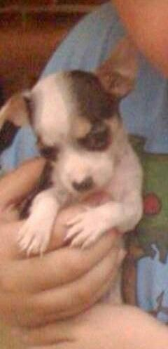 Snickers as a baby
