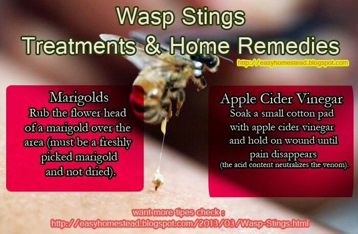 Marvelous Home Remedy For Wasp Stings We Used The Onion And It Interior Design Ideas Tzicisoteloinfo