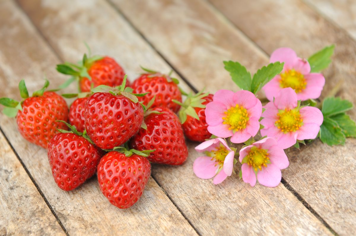 It is national strawberry day today heres a strawberry so sweet it is national strawberry day today heres a strawberry so sweet you wont need sugar but it has pink flowers oh my mightylinksfo