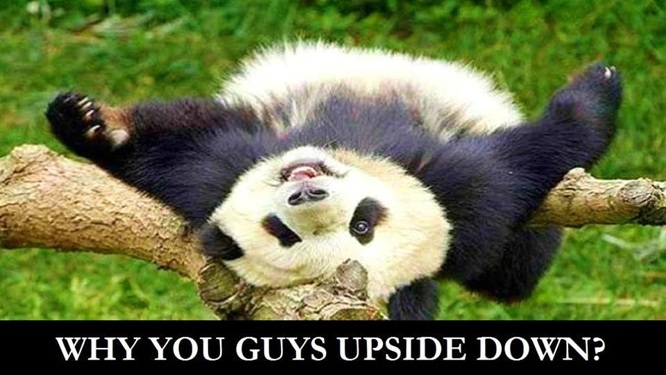 Pin by Travelpreneur Tao on Panda Cuties Wildlife