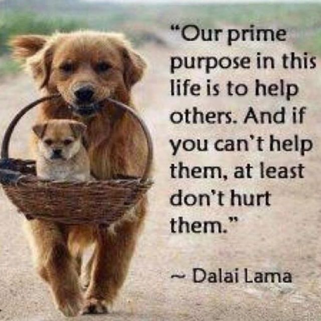 Our prime purpose in life is to help others...