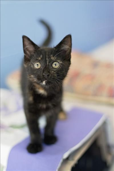 This Kitty She Is 200 At The Gold Coast Animal Welfare League Animals Pets