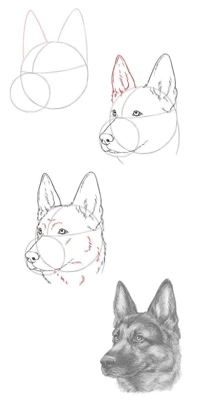 Photo of Draw a German Shepherd – #a # sheepdog #draw – #new – drawing … Draw a German …