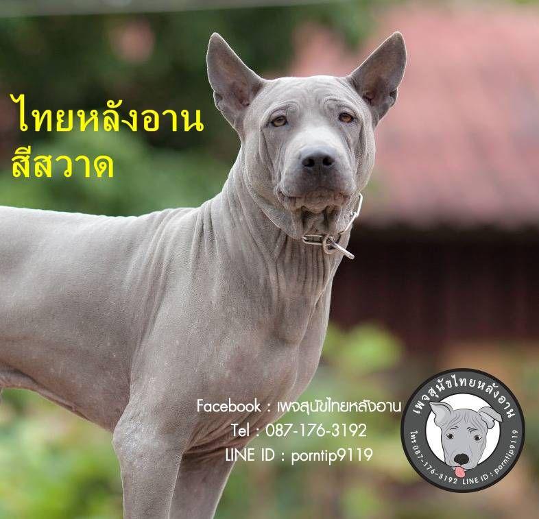 อำเภอแม สาย Amphoe Mae Sai