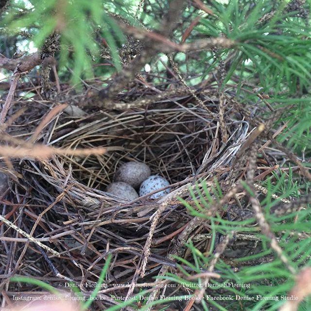 Cardinal Nest Nest Instagram Posts Birds